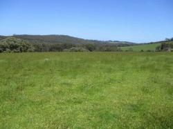 Green pasture, water and karri trees